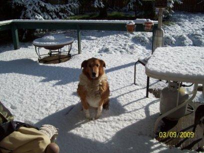 Morgan my dog