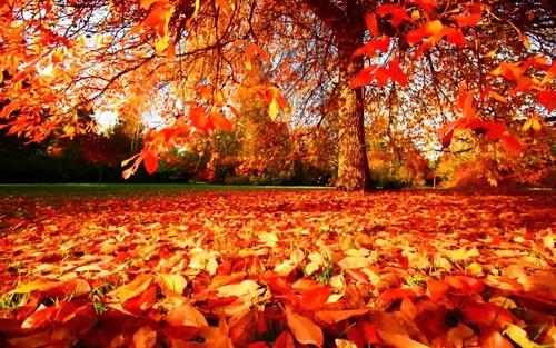 Autumn-Wallpaper-autumn-2017