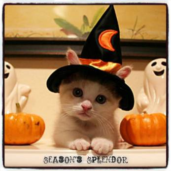 Halloween WHITE CAT AND PUMPKINS 2017