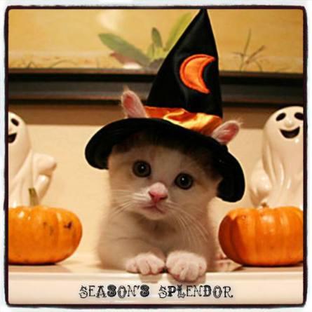 Halloween WHITE CAT AND PUMPKINS 2017