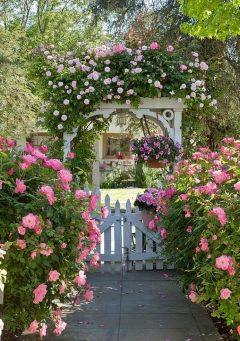 cropped-spring-hot-pink-vine-and-white-picket-fence-and-trelllis.jpg